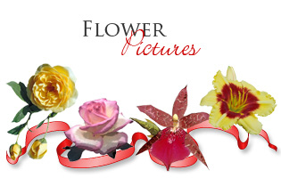 <b>FLOWER PICTURE GIFTS</b>