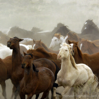 Colorado Horse Roundup