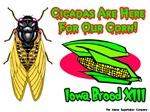 Cicada Iowa Corn