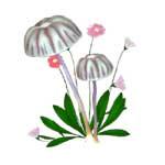 White, Purple Mushrooms Tiny Daisies