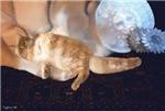Cat on Tiger Rug