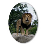 Lion Roaring by Celeste Sheffey