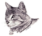 CATS - Graphite Tabby