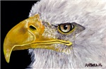 BIRDS -  BALD EAGLE