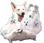 Beautiful White Dogs