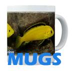 Cichlid Mugs