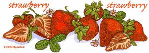 Fruit Tshirts