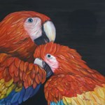 Mom and Baby Scarlet Macaw