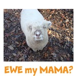 Sheep Sayings...Bless Ewe & Ewe My Mama?