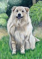 Harper, the dog
