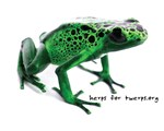 Green Azureus Design