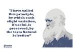 Darwin - Selection