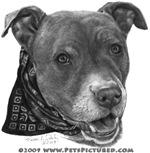 Roxy, Pit Bull Terrier