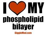 Phospholipid Bilayer Love
