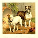 Bulldogs 1880 Digitally Remastered