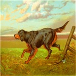 Gordon Setter Cassel 1881 Digitally Remastered