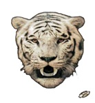 white tiger art illustration
