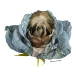 Van Gogh Rose