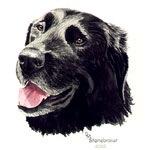 Smiling Black Labrador Retriever