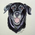 Bubba, Black Labrador