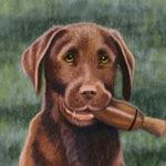 The Amateur, Choc Lab Puppy