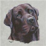 Mousse, Chocolate Labrador