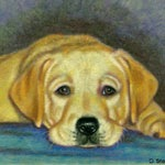 Time Out Yellow Lab Puppy