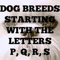 Dog Breed T-Shirts P - S