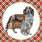 Welsh Springer Spaniel T-Shirts