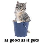 Tabby Cat Photo