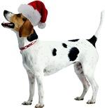 English Foxhound Christmas