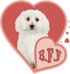 BFF Bichon Frise