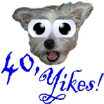40th Birthday Gifts, wide eyed dog & 40, Yikes!