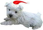 Westie Gifts for the Holidays!