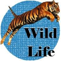 Wildlife T-Shirts & Gifts