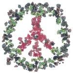 Yule Flower Peace