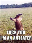 F You I'm an Anteater