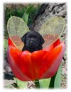 Labrador Retriever <BR>Fairy Dogs