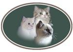 Muffin Mania Trio