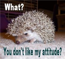 My Attitude Hedgehog