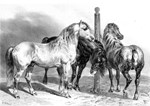 Antique drawing of Three Horses