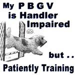 PBGV Agility
