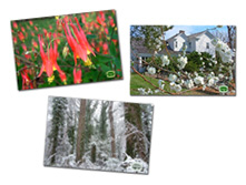 Chesapeake Arboretum Post Cards