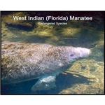 Florida Manatee Photo