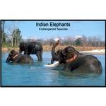 Indian Elephants Photo