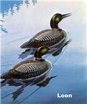 Loon Bird