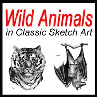 Wild Animals Sketch Art