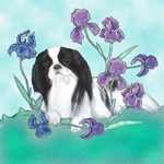 Japanese Chin adult