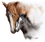 A Horses Mothers Love Clothing