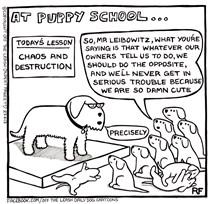 Puppy School - Chaos